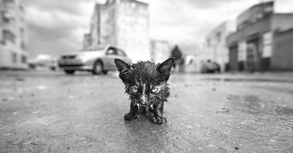 Девушка спасла котенка от холодной смерти