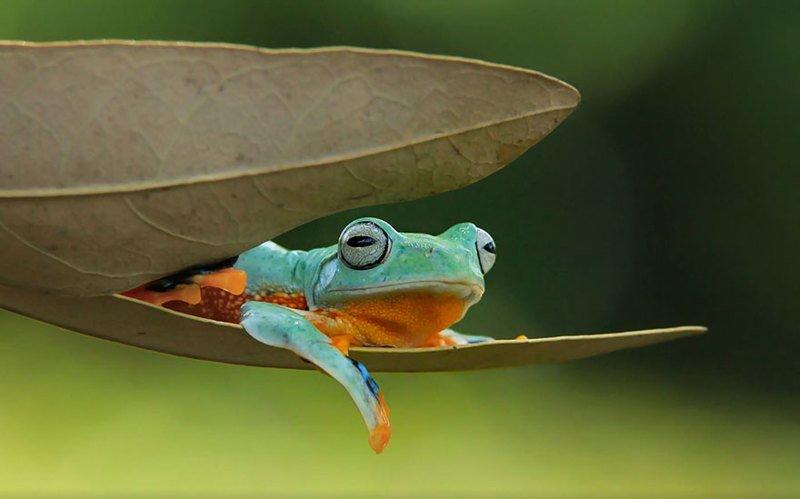 И знакомство жизнью лягушками с их